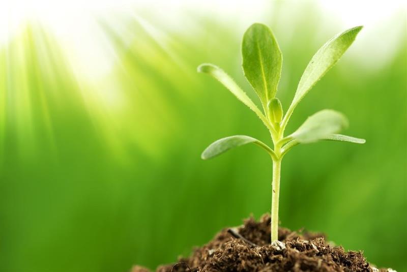 flora-plant-sprout-grass-dill-food-seasoning-leaf-soil-vine.jpg